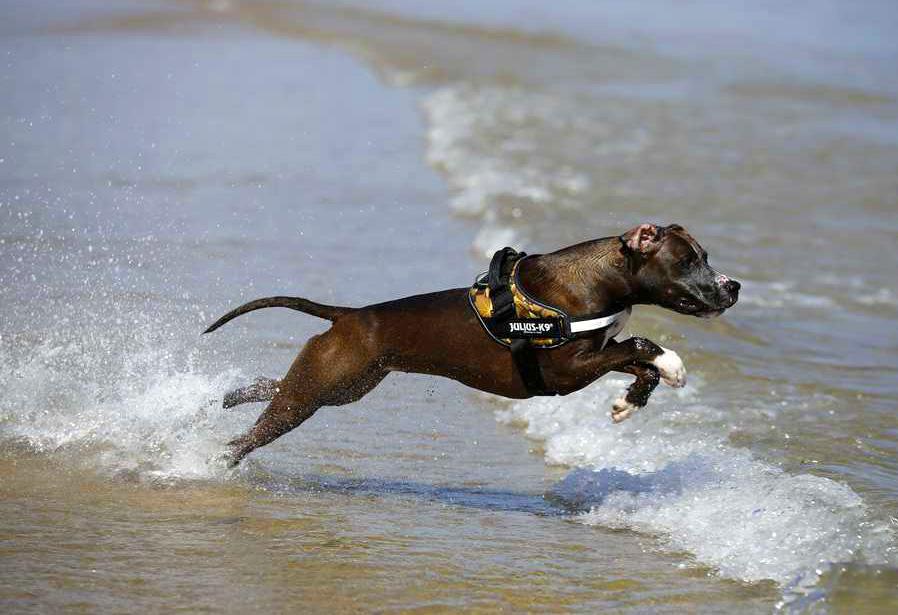 cane--in-acqua-alla-spiaggia-di-duke