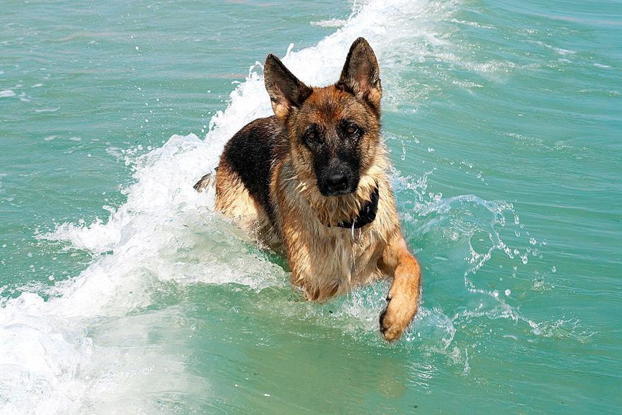 cane-alla-spiaggia-di-duke