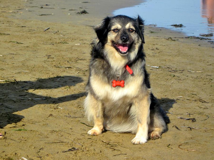 cane-in-riva-alla-spiaggia-di-duke